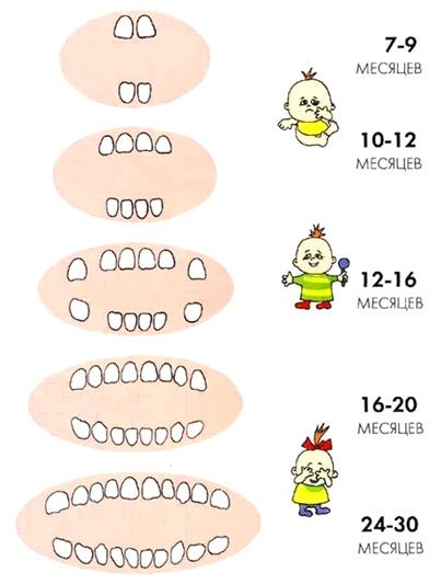 Соответствие возраста и количества молочных зубов у ребенка